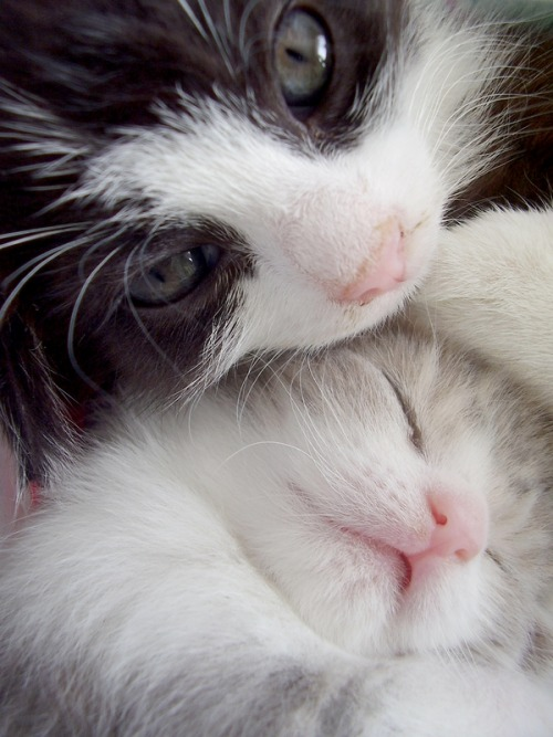 magicalnaturetour:  Kittens by ~michaela66 ~ Sweet Dreams beautiful friends ♥