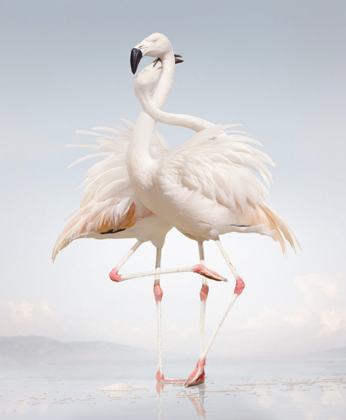 Necking! Photographer Simen Johan