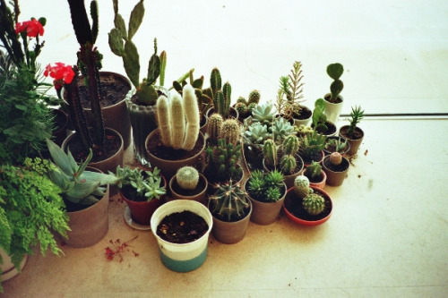 thedaintysquid:  untitled by Joana Salta on Flickr.