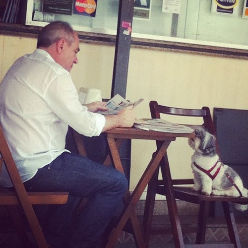 #dog #breakfast #man #newspaper #funny #puppy #cute (Publicado com o Instagram)