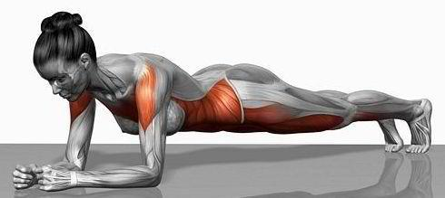 iwillbe145:  Here are the muscles you work when you're planking.