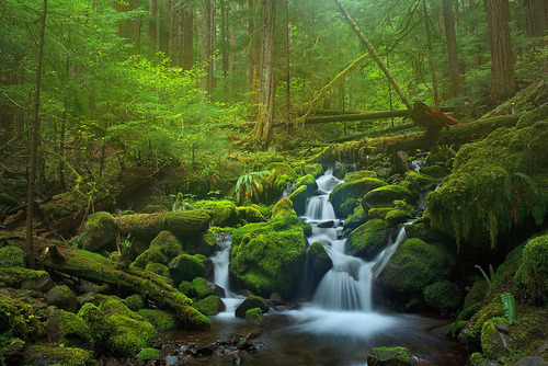 "morgondagg:  ""Fairy Land In Rainforest"" by Hong Zeng"