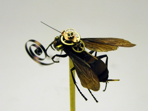 poptech:  Borrowing from science fiction and fact, Insect Lab customizes real insect specimens with antique watch parts and other technological components. From ladybugs to grasshoppers, each is individually hand adorned, and original- a unique celebration of the contradictions and confluences between nature and technology.