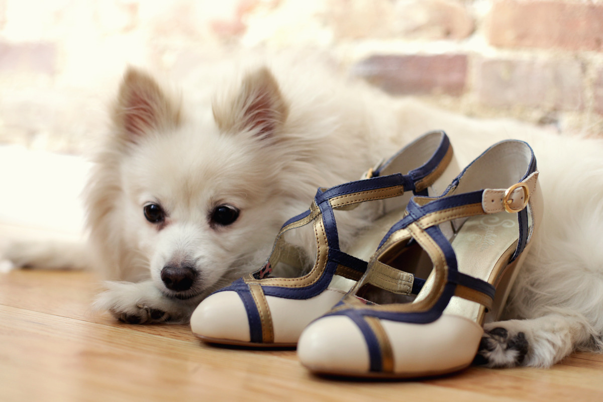 How chic is this perfect pair? Keiko Lynn adores her Seychelles shoes and her pup Miku. Have you shown us your perfect pair yet? Enter to win a pair of shoes a month for a year!