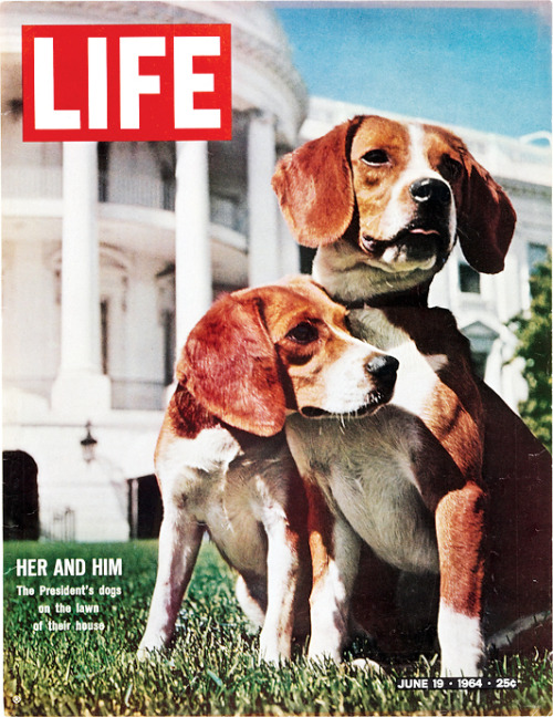 life:  On this day in LIFE Magazine — June 19, 1964: Her and Him: The President's Dogs on the Lawn of Their House.