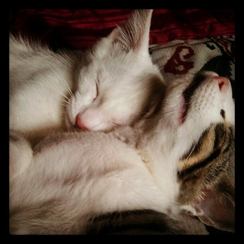 beestungtitties:  Aww they randomly fell asleep :)