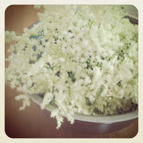 Elderflower love. (Taken with Instagram)