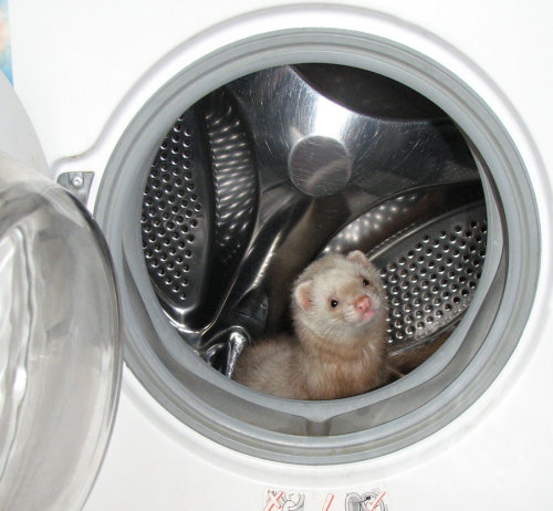 So I'm in the washer. So what.
