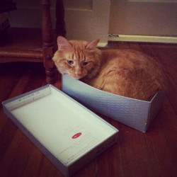 Humans try on shoes; cats try on shoeboxes. (Taken with Instagram)