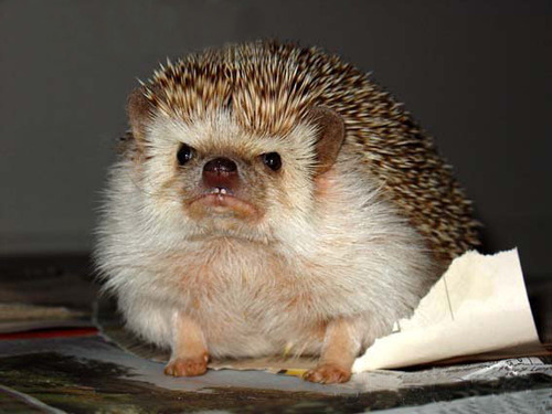 makethisdaycount:  hedgehog is not amused!