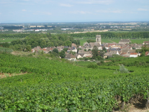 A really intelligent and concise take on 2010 Burgundy on Doug Barzelay's blog, Old Vine Notes. The article is a few months old, but it's a great read for anyone curious about '10's, many of which will be hitting the market in the coming months.