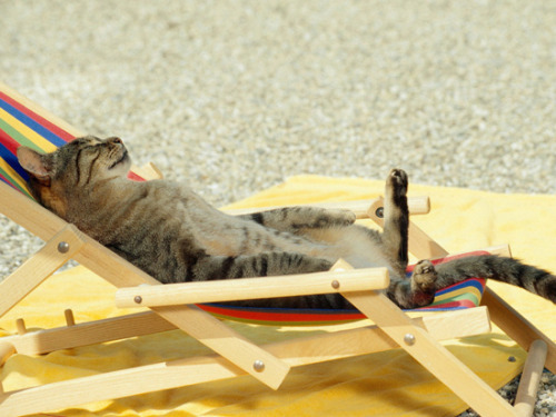 13 Cats Having A Better Summer Than You (via @buzzfeed)