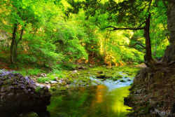 outdoorsanctuaries:  green forest and water stream with mossy stones (by SergeyIT)