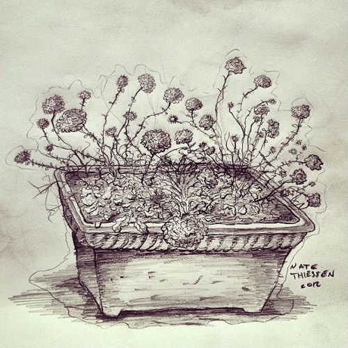 natethiessen:  And another study of plants. yahh