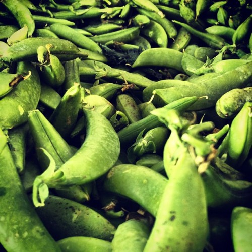 Sugar snaps at Maxwell's Farm @unsqgreenmarket  (Taken with Instagram at Union Square Greenmarket)