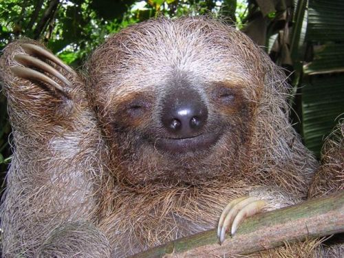 wat is it wif des sloths n weed?