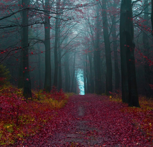 jmayzer:  Hameln's Forest Germany