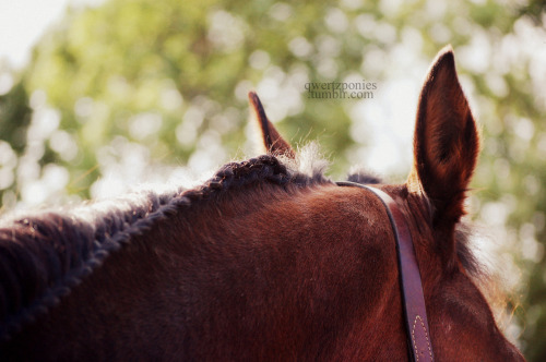haleybreen:  this horse is so perfect. photo by qwertzponies summer '12  missing summer also mama is the bestest horse