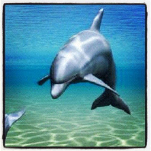 Dolphin (Taken with Instagram)