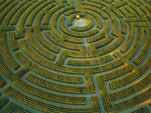 The largest plant maze in the world at Reignac-sur-Indre. France. Each year, a maze of corn or sunflowers emerges from the ground over the summer, is harvested in the autumn, and then reappears the following year in a different form.