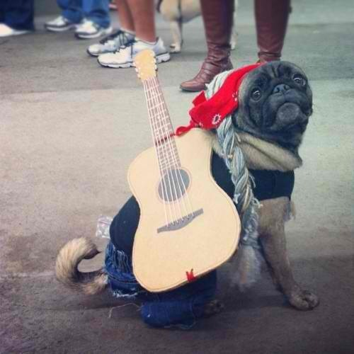 "pugsinclothes:  This Willie Nelson pug won the costume contest at Austin's 2012 Pugapalooza. He had some of those ""funny cigarettes"" stashed in his pocket."