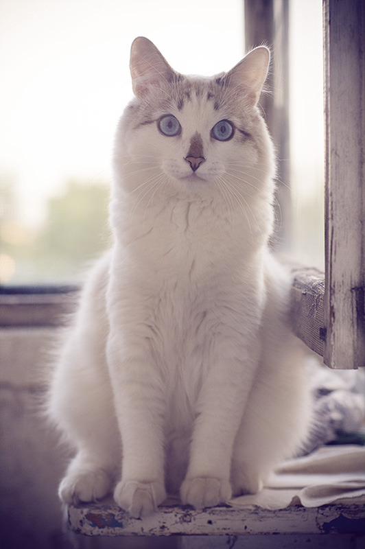 "photogenicfelines:  (via 500px / Photo ""~_^)"" by Kirill Kalyakin)"
