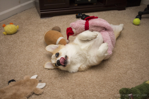I think this properly summarizes corgis…