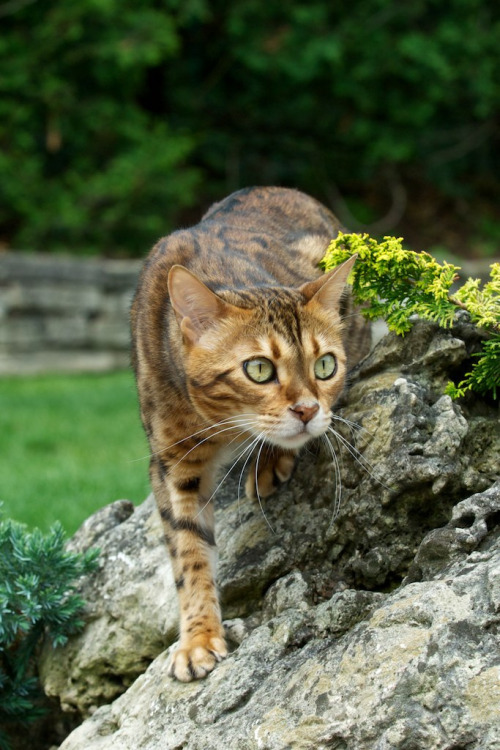 photogenicfelines:  Chrissy 4 (by Graham Etches)