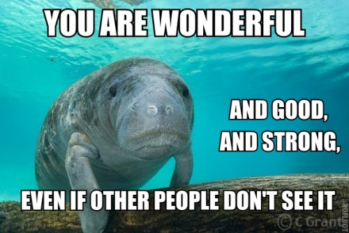 manders0703:  Thank you, calming manatee!