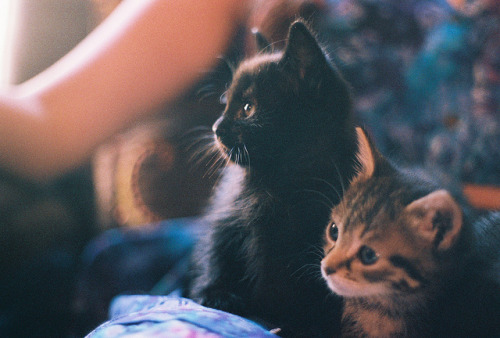 satansbaby:  untitled by Kelsey Curtis on Flickr.