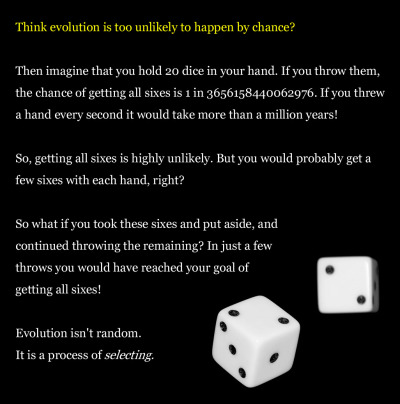 "atheist-overdose:  This is an analogy i use to explain evolution to someone who think the chance of it happening is too unlikely.follow for the best atheist posts on tumblr  I don't like this metaphor because it suggests there is still someone rolling the dice. There is no one rolling the dice—not as far as we can tell.  Plus, I think a better metaphor would be to simply explain it (or explain it, simply): Throughout the universe things collide all the time—small collisions and big ones.  Sometimes the elements that make up the colliding things combine on a chemical level and create life.  If that life doesn't have the right characteristics to survive the environment it was born into, it dies.  Now imagine this happening a trillion times around the universe—or even around our planet.  The overwhelming majority of the life that has been created by collisions big and small on planet Earth didn't have the right characteristics to survive this planet.   I hope that is nice and clear to everyone, even folks who Believe. ""Evolution"" isn't even really a ""process"".  It's just something we view as a process.  It's utterly random and disconnected to other examples of it.  It's not an intelligent process.  It's not even a particularly efficient process as it sometimes takes millions or billions of years to yield results.   No god, no ""intelligent design,"" just the universe randomly serving up puzzle pieces that may or may not fit together.   To me, that makes us, our planet, and life, in general, all the more precious. /END OF RANT"