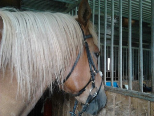 Time for some horseback riding! I'm not riding today thou :) His name is Janero.