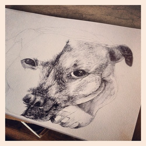 Pissed off it doesn't look like my dog. So I've left it unfinished. #dog #art #illustration #drawing #sketch #inkpen  (Taken with Instagram)
