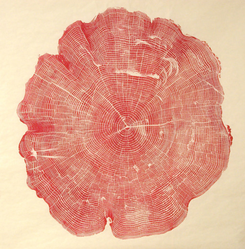 explore-blog:  Woodcut – artist Bryan Nash Gill's stunning, labor-intensive ink relief prints of the cross-sections of dead and fallen trees