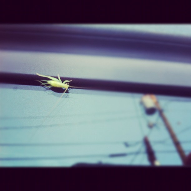 BABY BUG (Taken with Instagram)