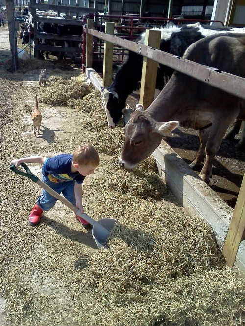 "Jonnie Zweber, 3 years old, Zweber Farms, Elko, Minn. ""Our middle child loves pushing up feed for our cows. To him it is like playing in a large sandbox. Our kids love helping on the farm. To them it isn't work, but a chance to do the same neat things that Mom and Dad do. Of course the 'work' they do is fully supervised and age appropriate."" — Emily Zweber via the Harvest Network."