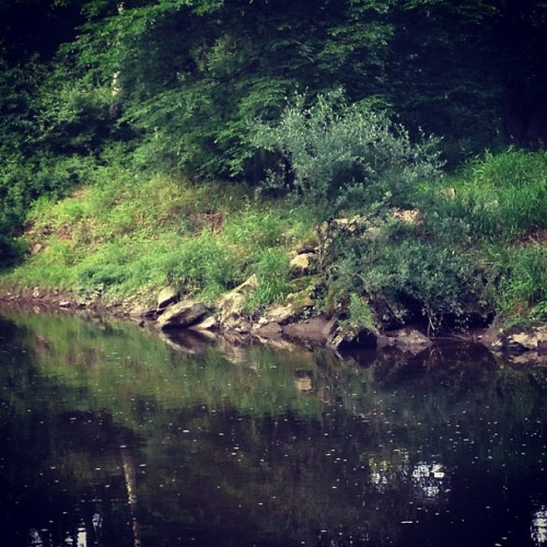 #Boredatwork #series #albinoninja #adventure #life #work #water #river (Taken with Instagram)
