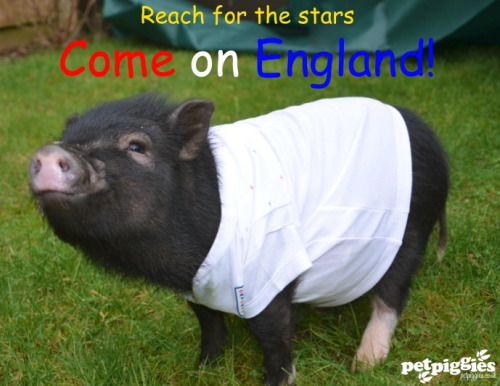 This Little Piggy is showing their support!
