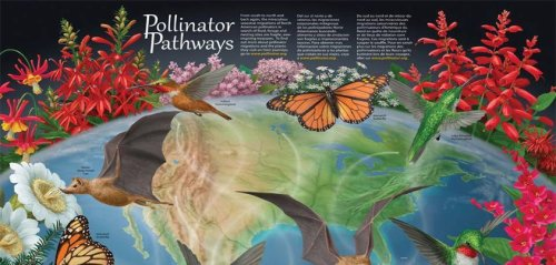 It's Pollinator Week! From June 18 - 22, we'll be highlighting the importance of pollinators and giving you tips about what you can do to help them thrive!