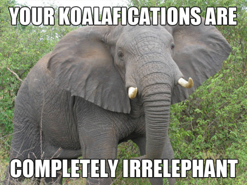 jeffcarroll:  amyvernon:  I usually hate puns, but DYING.  via dyingforbadmusic:  Punny Animals   I die.