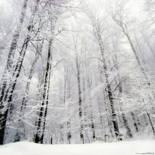 walkintheirfootsteps:  Into the White by *MikaTrta