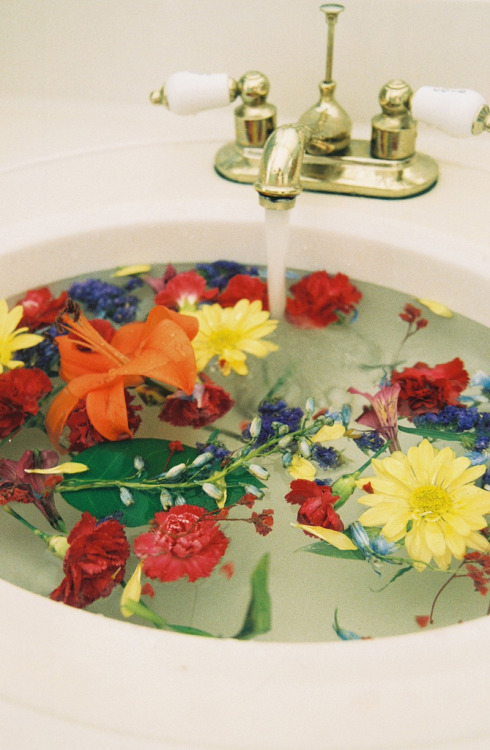 cheriegabriella:  184. FLOWERS IN THE SINK. (by Cнerokeetribe)