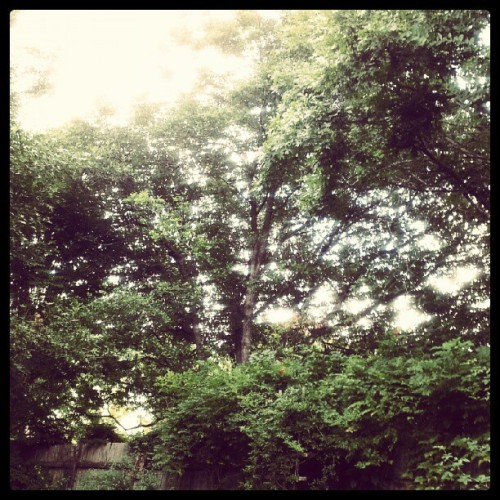 Tuesday afternoon (Taken with Instagram)
