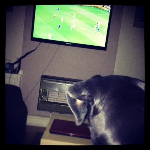 Even my dogs watching England! #englangmatch #england #match #dog #randompicture  (Taken with Instagram)