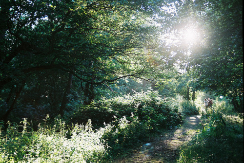 fl0werp0t:  evening light by Sarah__McLean on Flickr.