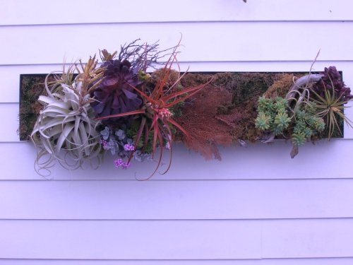 Living wall reworked by ROGUE hands …. via Rogue Nursery in Malibu.