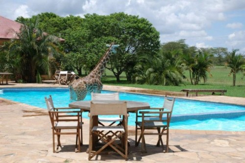 """Honey? There's a giraffe in our pool…."""