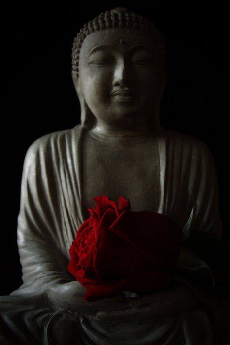 buddhabe:  Buddha, with a beautiful red rose.