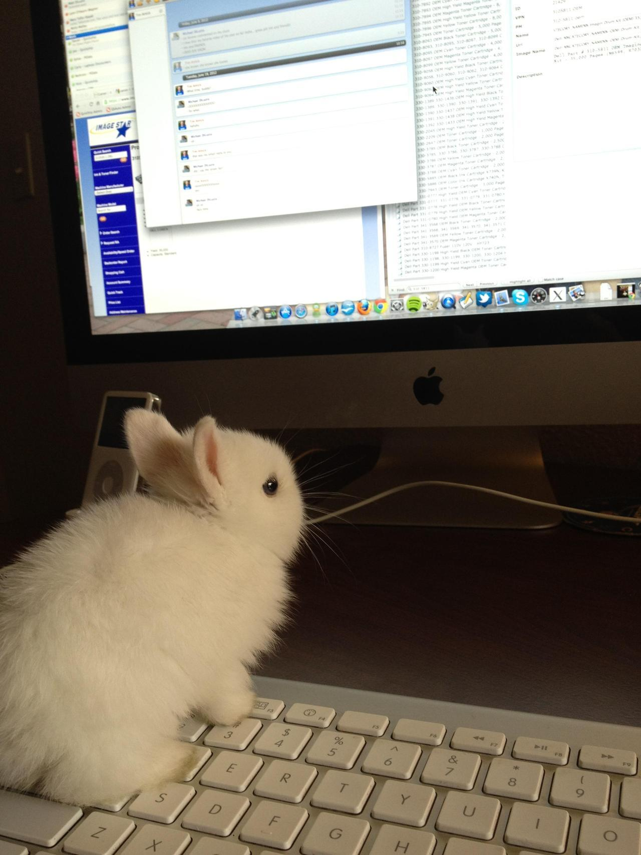 Helpful Bunny is helping. Photo via Imgur