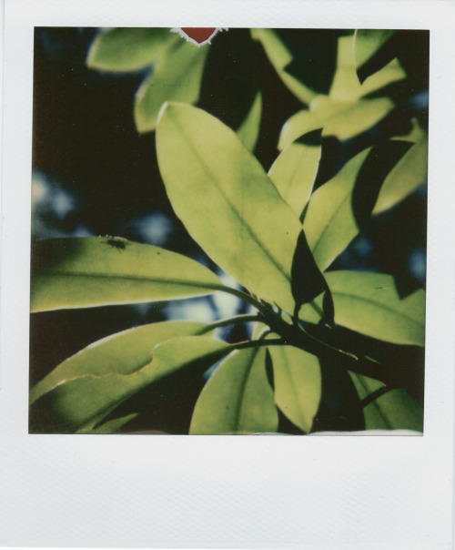 thekodachromer:  Superfly Taken with a Polaroid SX-70 Sonar SLR fold-up camera. PX-70 Cool Color shade film   Sometimes life lends you a happy accident!